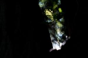 Kunstreise-Valle-Agredo-Dante-Alighieri-KunstBox-DSC2906-by-FOTO-FLAUSEN