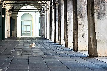 Kunst-Reise-Venedig-Dante-Alighieri-KunstBox-_DSC9784-by-FOTO-FLAUSEN